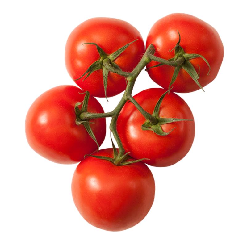 بذور طماطم ماجي 1000بذرة